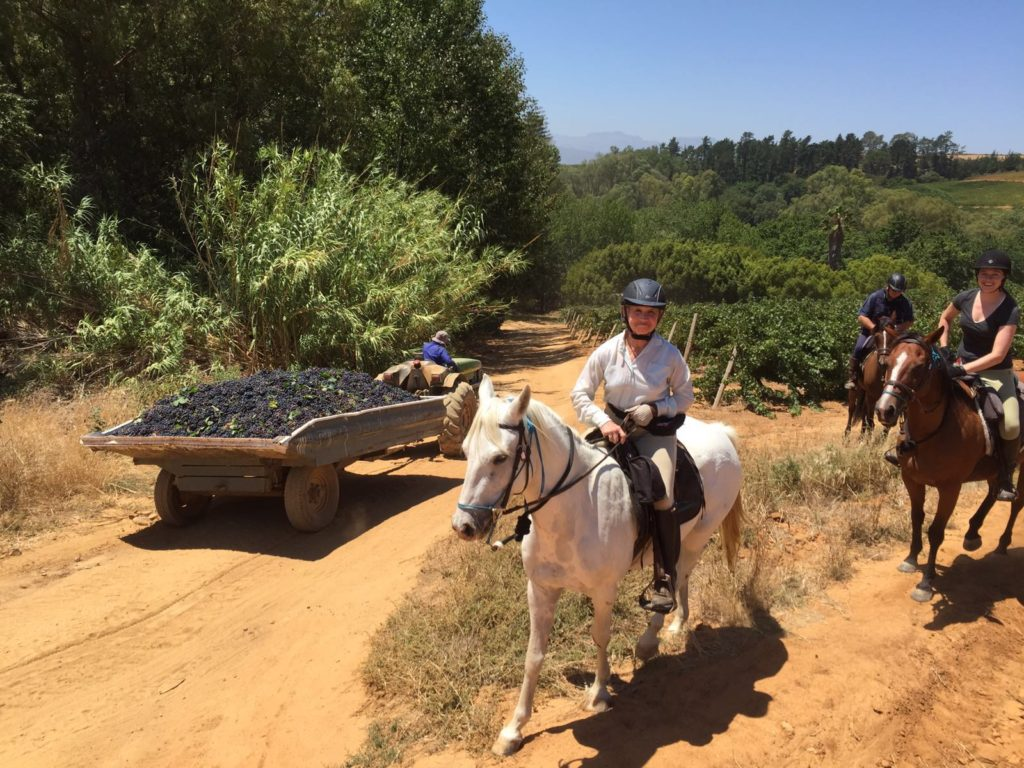 Centre-based riding holidays Cape Winelands Riding